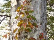 紅葉の白山(大倉山)2011/10/9-10